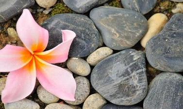 lily_stones